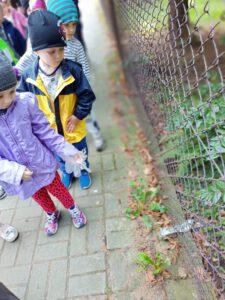 Dzieci obserwują rośliny.
