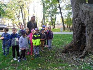 Dzieci mierzą obwód drzewa.